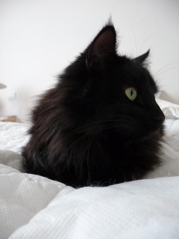 Lili au lit