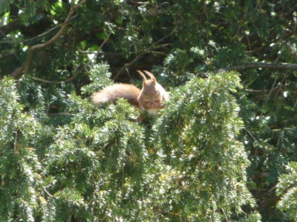 Mon p'tit écureuil