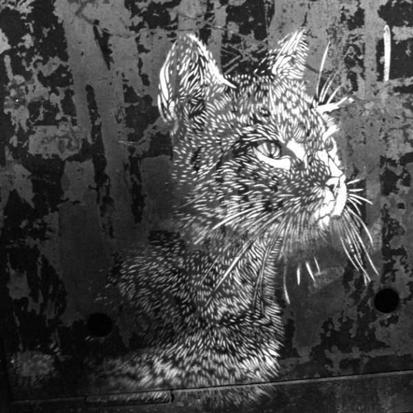 Il gatto sul muro