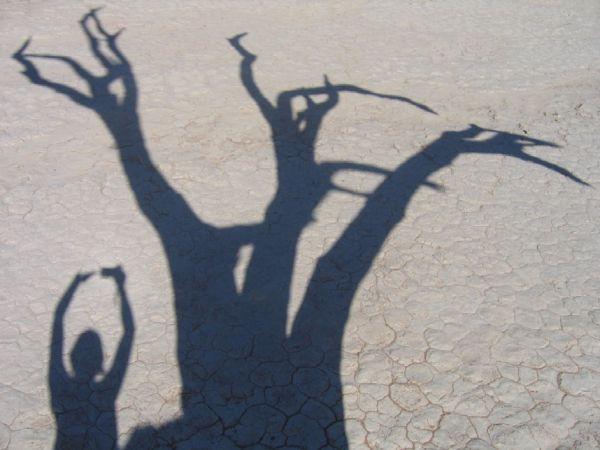 Dans la lumière, l'ombre