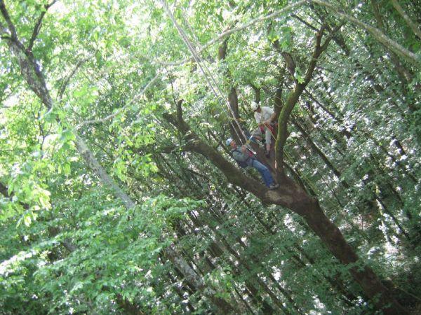 Comme l'oiseau sur la branche