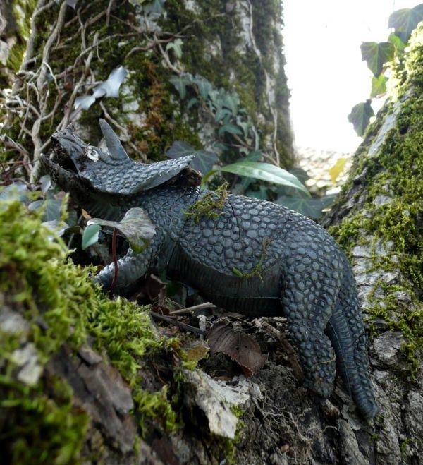 Tricératops arboricole